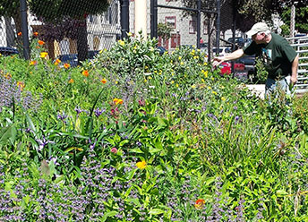 California native plants in bloom at Upper Noe Rec Center